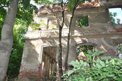 Ściana Pałacu ukryta między drzewami